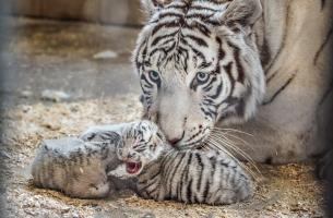 Fot. ZOO Safari Borysew